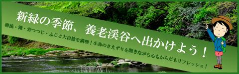 新緑の季節、養老渓谷へ出かけよう!