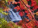 粟又の滝の紅葉